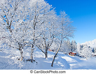Beautiful alpine scenery