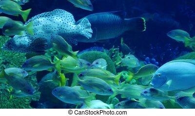 Beautiful an exotic see fish in an aquarium. Underwater Scene. 4k, 3840x2160