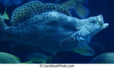 Beautiful an exotic see fish with open mouth in an aquarium.