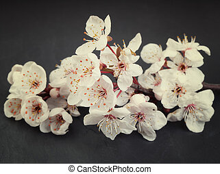 Beautiful and relaxing cherry blossom flowers on a dark tile...