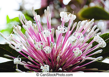 Beautiful and Unique Q-Tip Flower - Pink Q-tip flower with ...