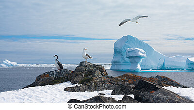 Antarctic landscape - Beautiful Antarctic landscape with...