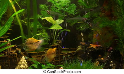 Beautiful aquarium  - Fish in aquarium with ship