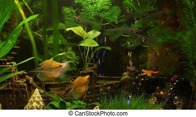 Beautiful aquarium  - Fish in aquarium with ship