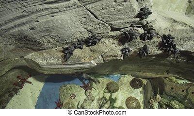 Beautiful aquarium with river inhabitants decorated with artificial stone