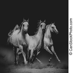 Beautiful arabian horses in dark