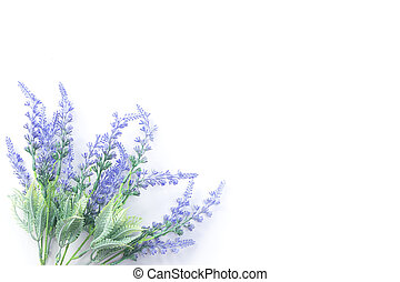 Lavender flowers on white background banner, copy space