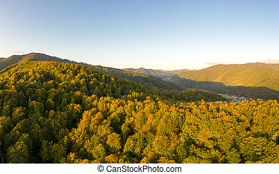 Beautiful Autmn forest shining at sunset. Flying above Colorful mountain flora