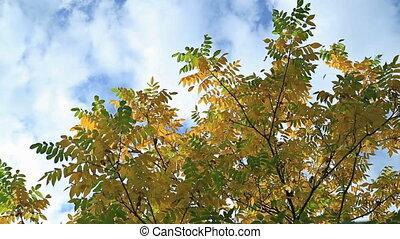 Beautiful autum leaves against sky.