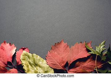 Beautiful autumn background - Autumn background. Fall. ...