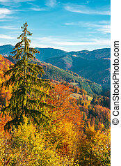 beautiful autumn background. forested hills in evening