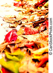 Beautiful autumn background with maple leaves close up. Colorful bright image with copy space for your design