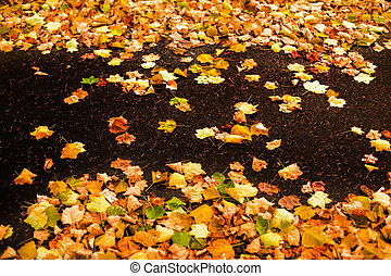 Beautiful autumn background with maple leaves close up. Colorful Outdoor autumn concept