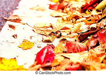Beautiful autumn background with maple leaves close up. Colourful bright image with copy space for your design