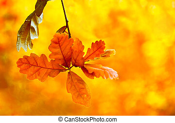 Beautiful autumn backgroung. Bright oak leaves in autumn forest Floral background with soft selective focus, shallow depth of field