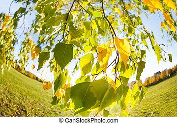 Beautiful autumn birch tree leaves