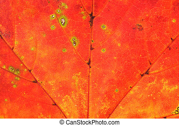 beautiful autumn color leaf