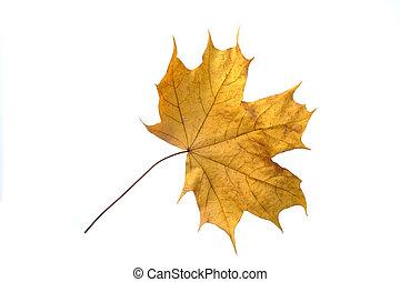 beautiful autumn color leaf