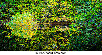 Beautiful autumn colored trees reflected in a small forest pond