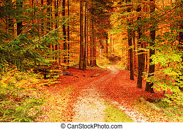 autumn - beautiful autumn colors in the forest