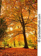 Beautiful Autumn Fall forest scene