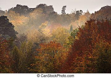 Beautiful Autumn Fall forest vibrant landscape