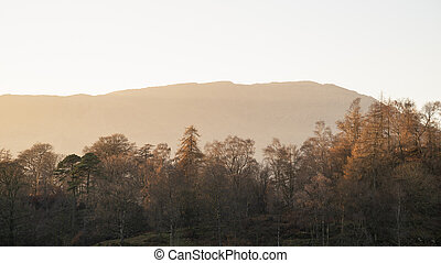 Beautiful Autumn Fall landscape image of larch and pine trees silhouetted against orange glow of sunset with mountain range in distance in Lake District UK