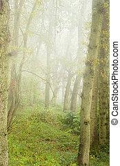 Beautiful Autumn Fall nature foggy forest landscape
