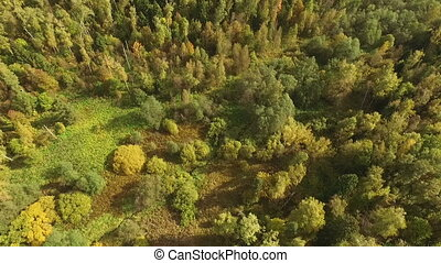 Beautiful autumn forest - aerial view