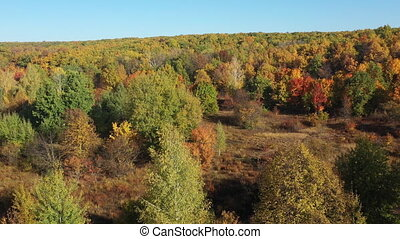Beautiful autumn forest from a height. Flying over the autumn trees of green, red and yellow in slow motion. Aerial shot of the forest during the day on a cloudy, sunny day. Nature without people.