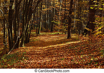 Beautiful autumn forest in evening sunlight, nature background