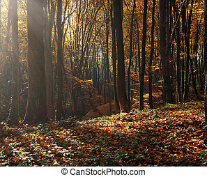 Beautiful autumn forest in rays of evening sun