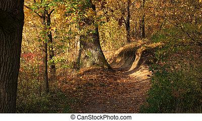Beautiful autumn forest in sunlight.