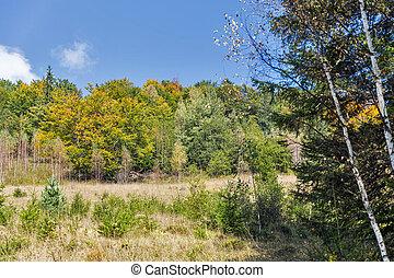 beautiful autumn forest landscape in the Carpathian mountains