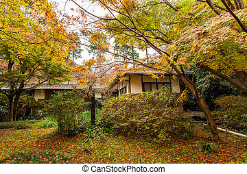 Beautiful autumn forest with cabin