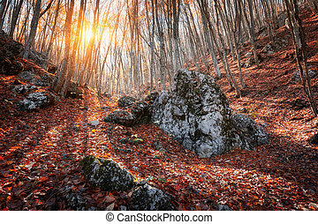 Beautiful autumn forest with stones in crimean mountains at sunset