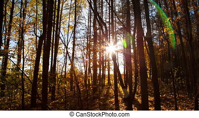 beautiful autumn forest with sun shining - dolly shot