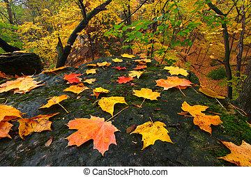 Beautiful Autumn Illinois Landscape