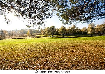 Beautiful autumn in city park