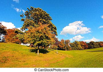 Beautiful Autumn in the Falkirk Park, Scotland