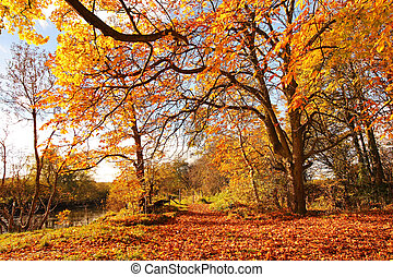 Beautiful Autumn in the Park, Scotland