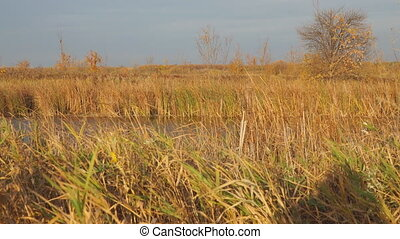 Beautiful Autumn lake surrounded by dry reeds and grass. Camera panning