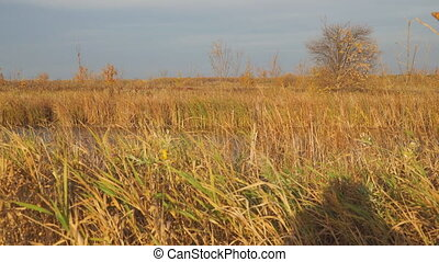 Beautiful Autumn lake surrounded by dry reeds and grass