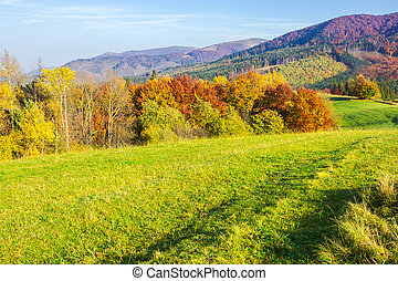 beautiful autumn landscape in mountains. green grass on the...