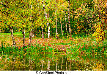 beautiful autumn landscape in the forest park near the lake