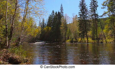 Beautiful autumn landscape. The mountain river flows in the middle of the woods