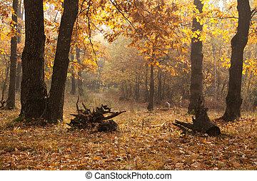 Beautiful autumn lane in the forest. Autumn landscape.