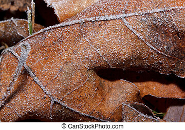 Beautiful autumn leaf covered with hoarfrost. Close up.