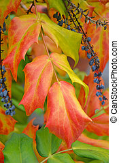 Beautiful autumn leaves and berries