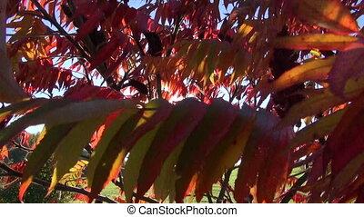 beautiful autumn leaves background